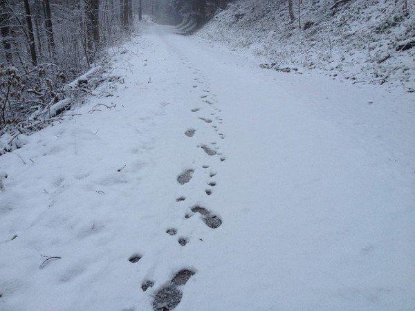 snow-110062_640